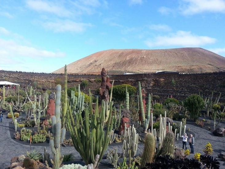 Manrique's cactus garden - Jardin de Cactus