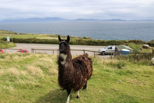 Kerry 2017&Susie 025